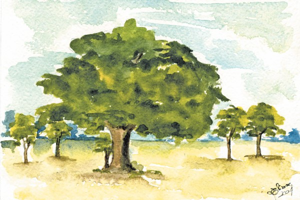 bosco querce