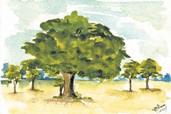 bosco di quercie