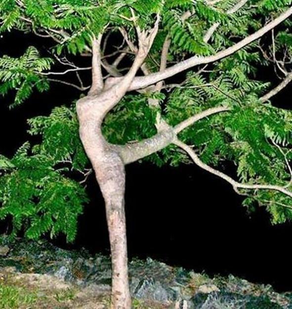 albero corpo